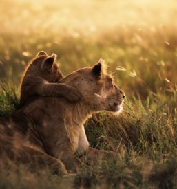 31481-serengeti-national-park