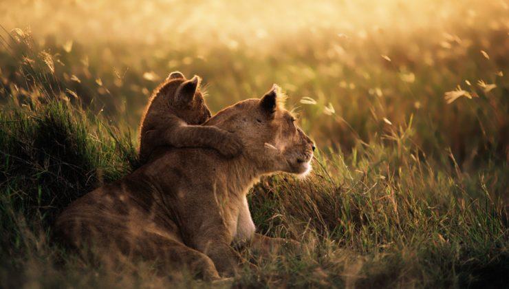 31481-serengeti-national-park