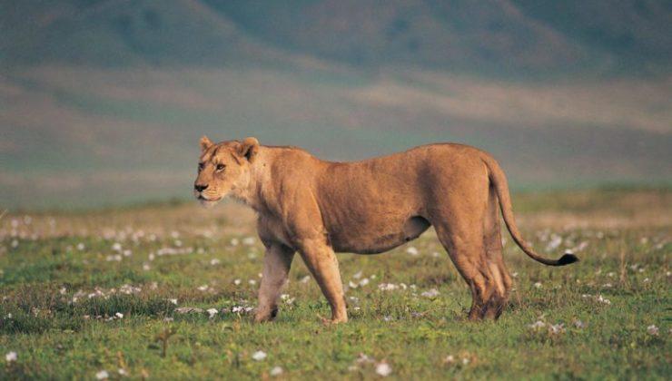 tanzania-game-drive-safari